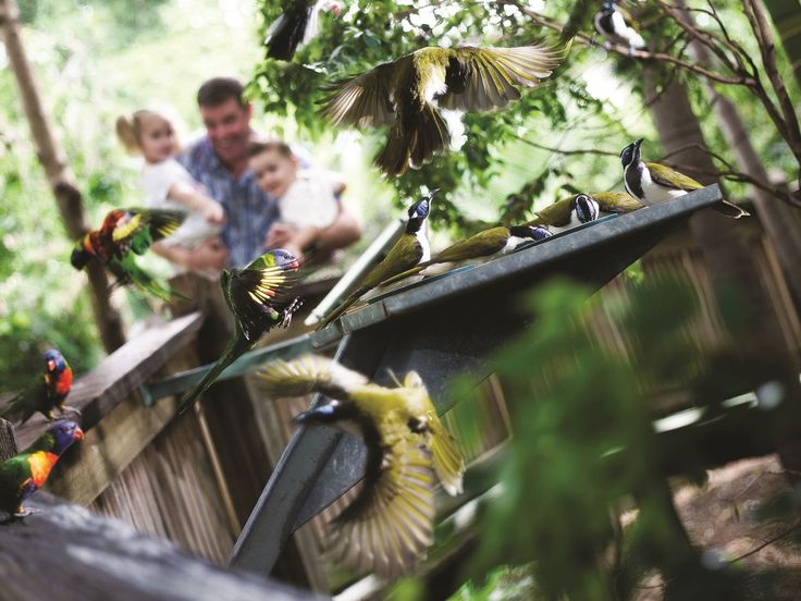 Ipswich Nature Centre in Ipswich's historical Queens Park offers a magical opportunity to get up close and personal with Australian native wildlife. For 80