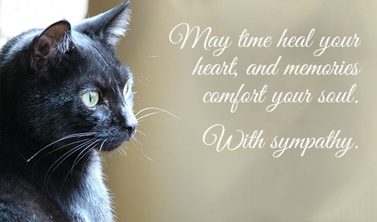 messages-for-loss-of-pet-cat