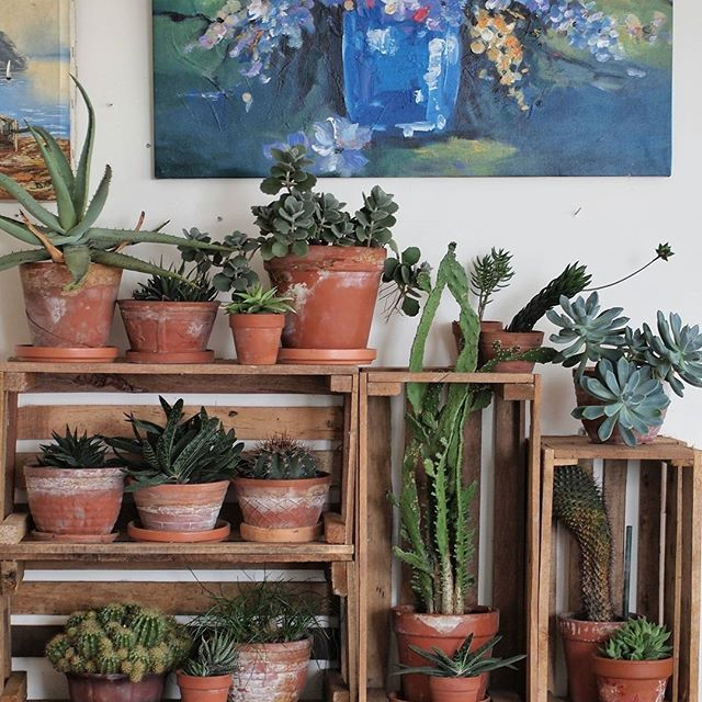 Are you Team Flowers or Team Plants? We're slightly biased... Team Plants forever :@matkamal79 #urbanjunglebloggers