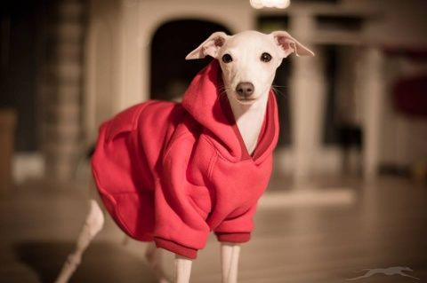 Bluza dla psa czerwona