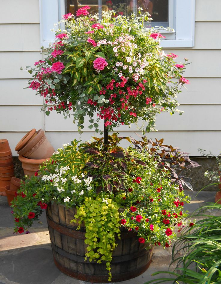 whiskey barrel planter: Plants included , Diascia, Nemesia, Verbena, Euphorbia-Diamond Frost, Coleus and Potato Vine
