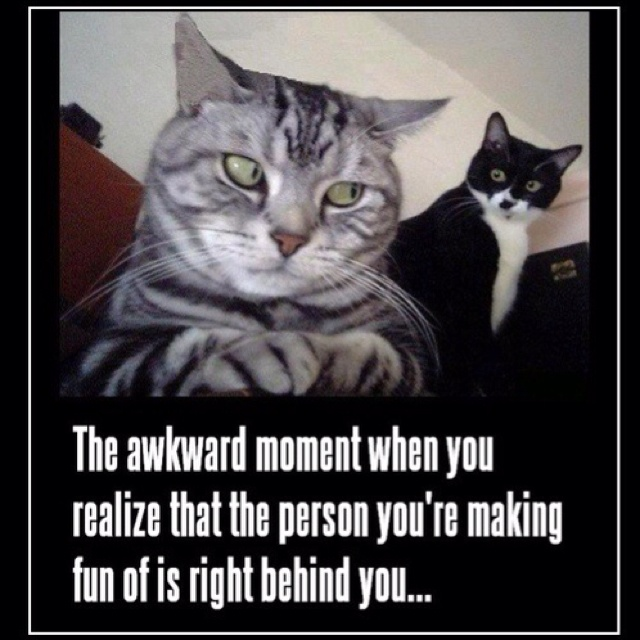 happens all the time :/Awkward Moments, Laugh, Funny Cat, Crazy Cat, Funny Stuff, Humor, Funny Animal, Cat Lady, Cat Memes
