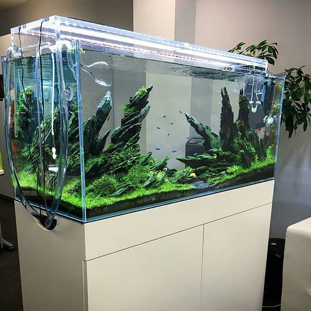20 best hardscape aquariums images on pinterest fish for Ada fish tank