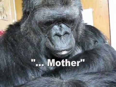 Short Clip - Koko the Gorilla responds to a sad scene from one of her favorite movies....(She understands spoken English, as well as American Sign Language.....Watch what she signs and see her expression after watching the sad scene where the boy has to say goodbye to his mother....)