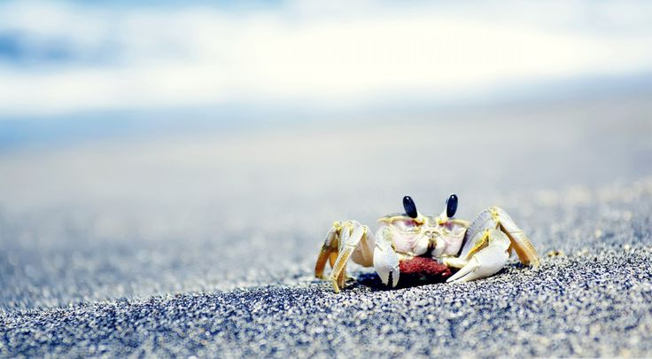 Crab On Sea Wallpapers in HD