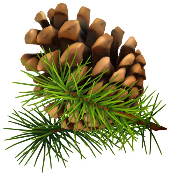 Pine Cone PNG Clip-Art Image