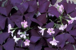 8 mejores plantas para interiores en oto