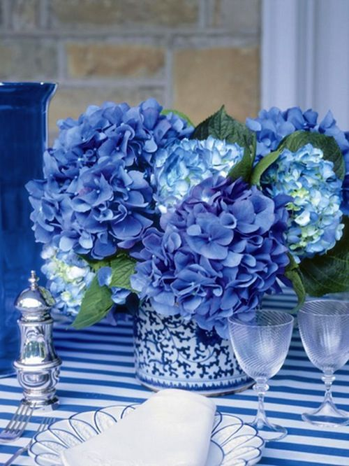 Set the table for her on Mother's Day with magnificent blue hydrangeas.