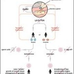 Kallmann Syndrome Treatment - http://www.kallmannsyndrome.org/kallmann-syndrome-treatment/