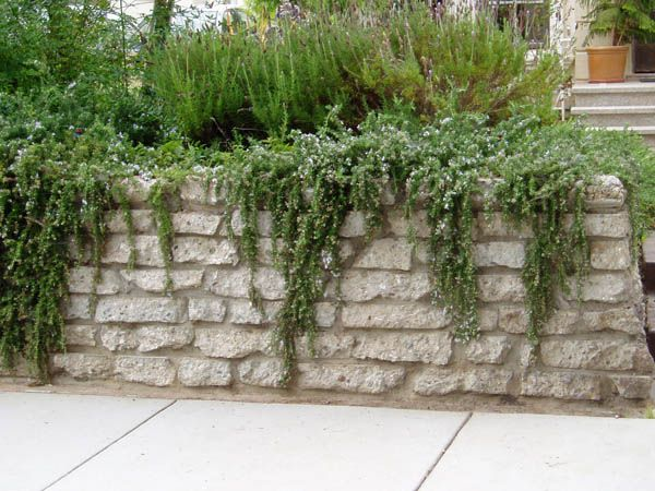 Recycled concrete wall.Serenity in the Garden: Repurposed and Recycled - Creative Ideas for Garden Design