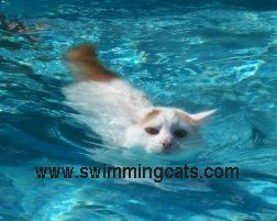Cats and pool parties | The Pet Product Guru – Cat Lovers