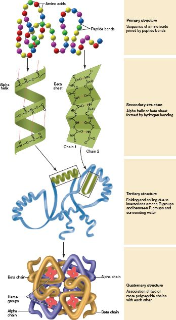 Quaternary Structure Vs. Tertiary Structure tertiary structures se...