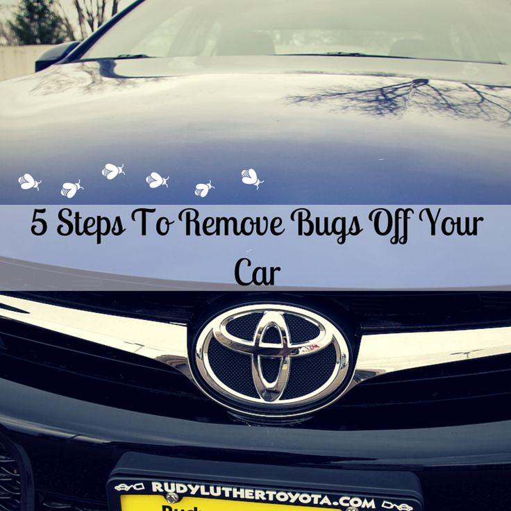 5 Steps To Remove Bugs Off Your Car