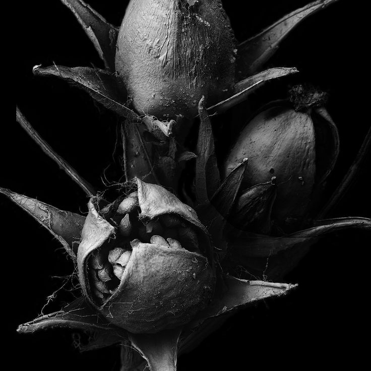 Matsuura Tomoya, withered plant Unknown — larghezza dell'immagine 4,9 mm