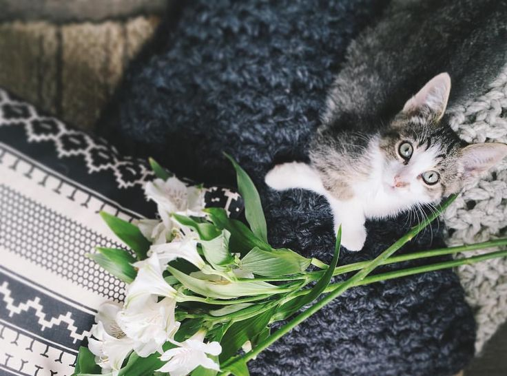 5 Decor Tips for a Pet Friendly Home