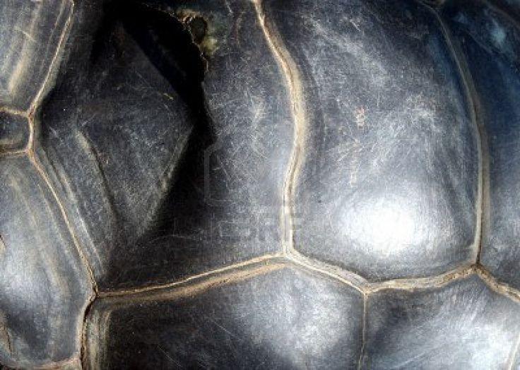 reuze-schildpad-schelp-textuur.