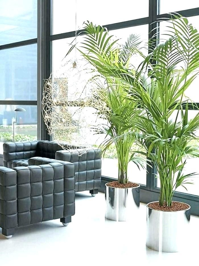 Indoor Plants For Living Room Plants For The Living Room Indoor Plants Living Room Decorating Stylish L Living Room Plants House Plants Indoor Room With Plants