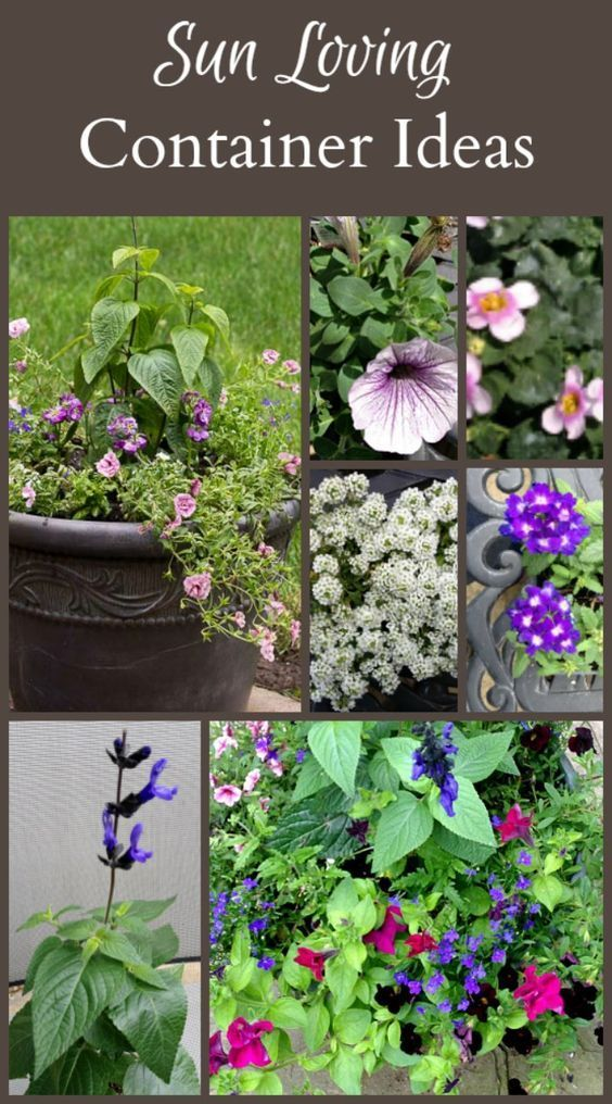 Full Sun Planter Ideas Containers that Will Last All