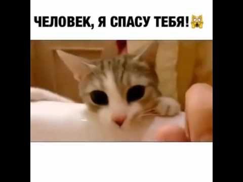 Кошка -  спасатель
