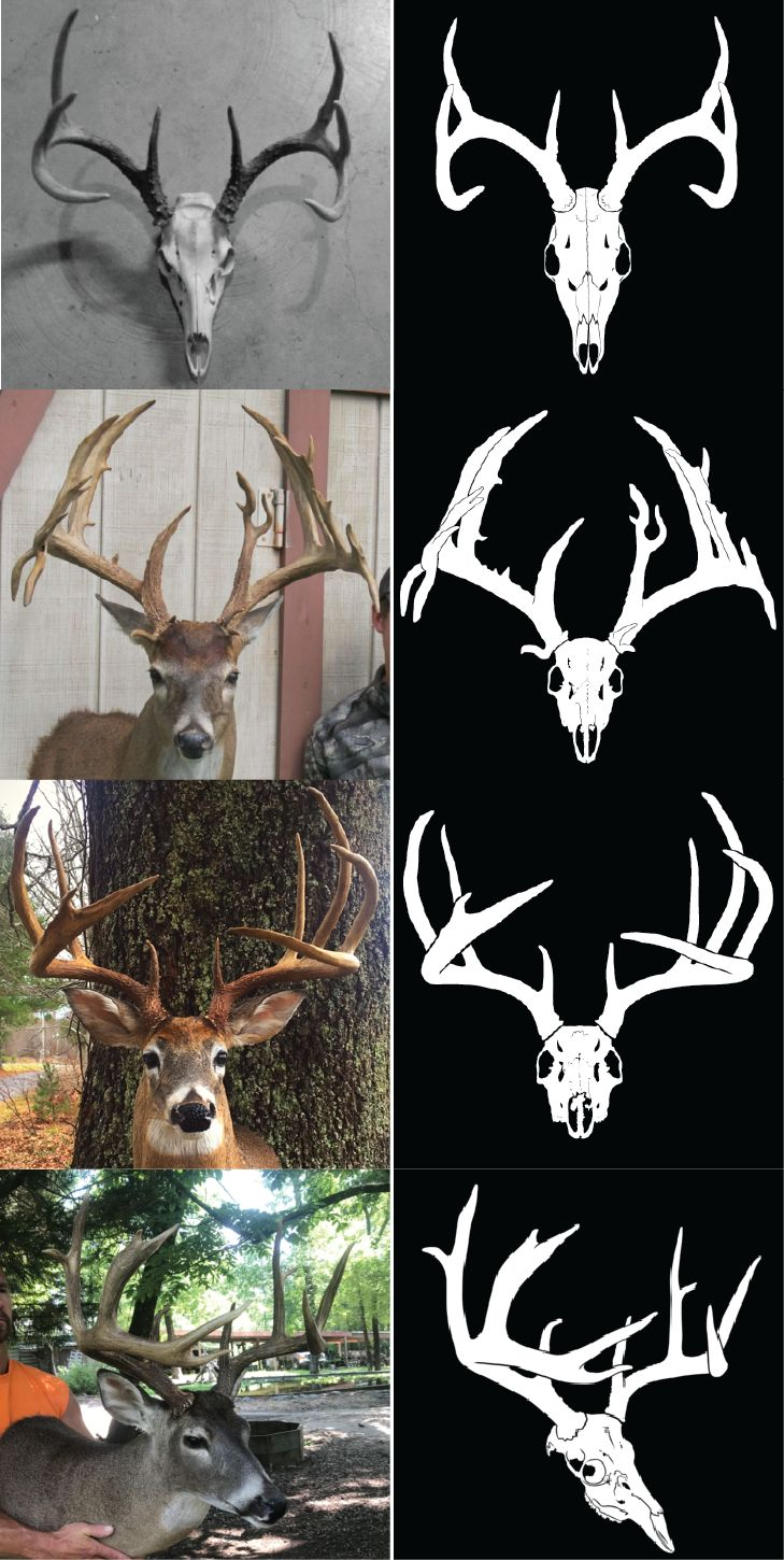 Louisiana Deer Map%0A Whitetail  Mule Deer  Blacktail  and Other Deer Decals
