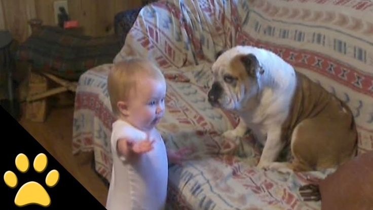 Baby Argues With Bulldog! It's Adorable & Hilarious!