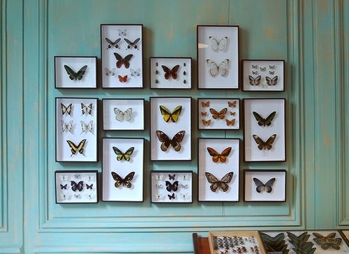 butterfly collection, taxidermy, home, interior, colour walls, insect, living room