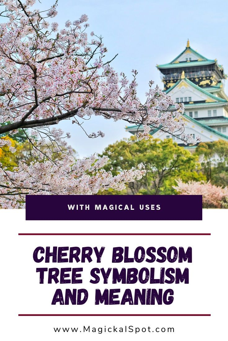 Japanese Cherry Blossom Symbolism And Meaning Sakura Tree In 2021 Cherry Blossom Symbolism Cherry Blossom Meaning Japanese Cherry Blossom