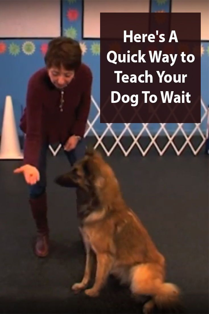 Teach Your Dog To Wait In 8 Easy Steps Dog Training Dog