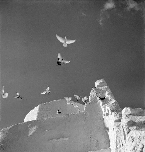 Πουλιά. Μύκονος, 1950-1955 Βούλα Θεοχάρη Παπαϊωάννου  - Μουσείο Μπενάκη