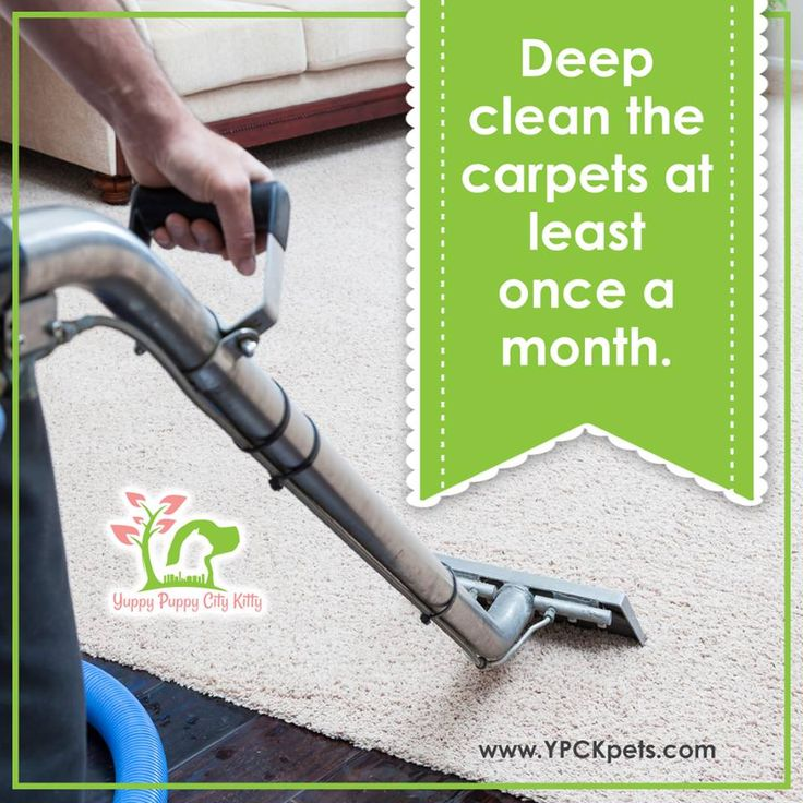 #DidYouKnow: The Norwalk virus -- a virus that causes stomach flu -- can survive in an uncleaned carpet for more than a month. It may be a good idea to steam clean the carpets at least once a month. Keep your carpet clean and yourself healthy. #CarpetCleaning #YPCKempowers #womenempoweringwomen #springcleaning101