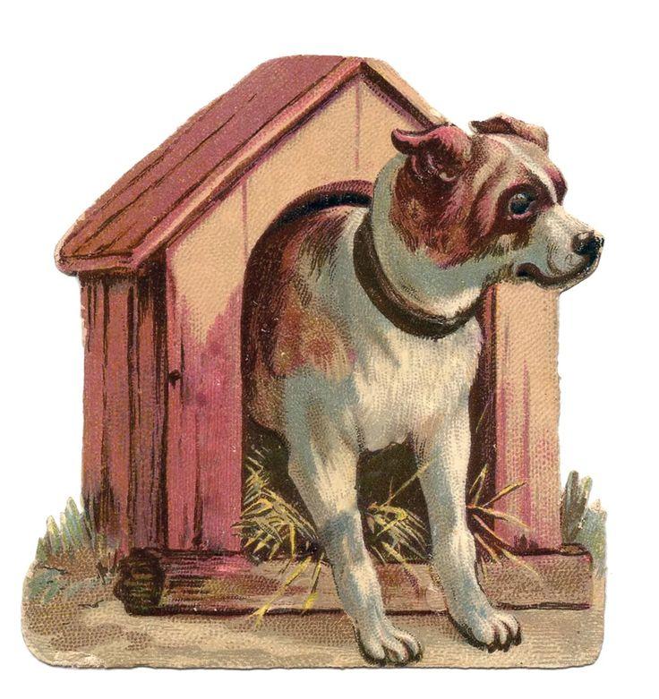максим картинка собака и дом вернинского позволяют рассматривать