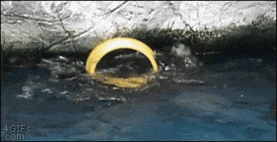 This otter having the time of his life:
