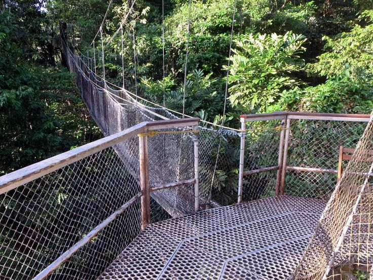 The 154-meter Iwokrama Canopy Walkway near Atta Rainforest Lodge in central Guyana provides treetop views from its four platforms 30 meters above the rainforest floor.