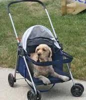 Cochecito para perro