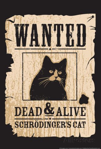 Schrodinger's Cat Photo by Snorg Tees at AllPosters.com