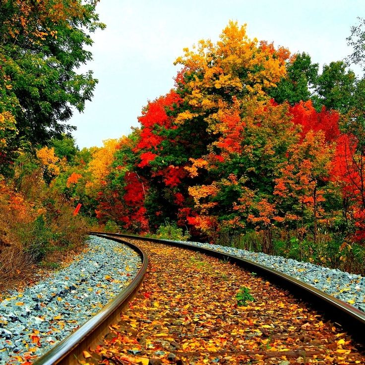 Fall Wallpaper Images Free: Fall Scenery Wallpaper With Pumpkins