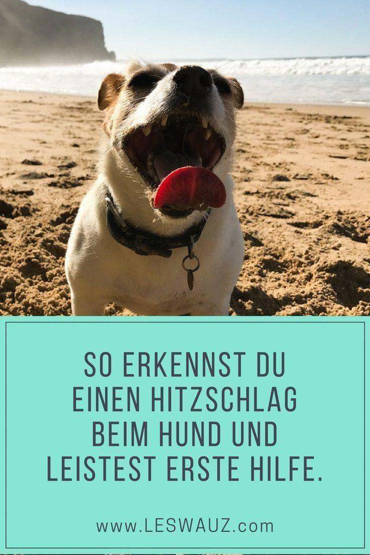 Pin Auf Sommer Mit Hund Rezepte Sport Spiel