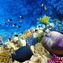 El océano se enfrenta a una extinción masiva similar a la de los dinosaurios - Infobae.com  Infobae.com El océano se enfrenta a una extinción masiva similar a la de los dinosaurios Infobae.com Una investigación de la Universidad de Stanford aseguró que la pesca indiscriminada generará la extinción de toda la vida acuática del océano. Qué habría que hacer para revertirlo. 19 de septiembre…