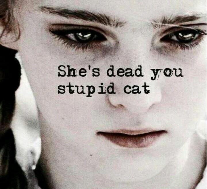 Primroses Cat Hunger Games