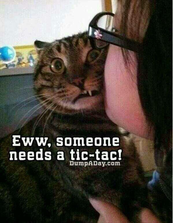 Cat Human Stinks Meme