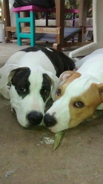 75 besten Animales y Mascotas Castaneda Bilder auf Pinterest ...