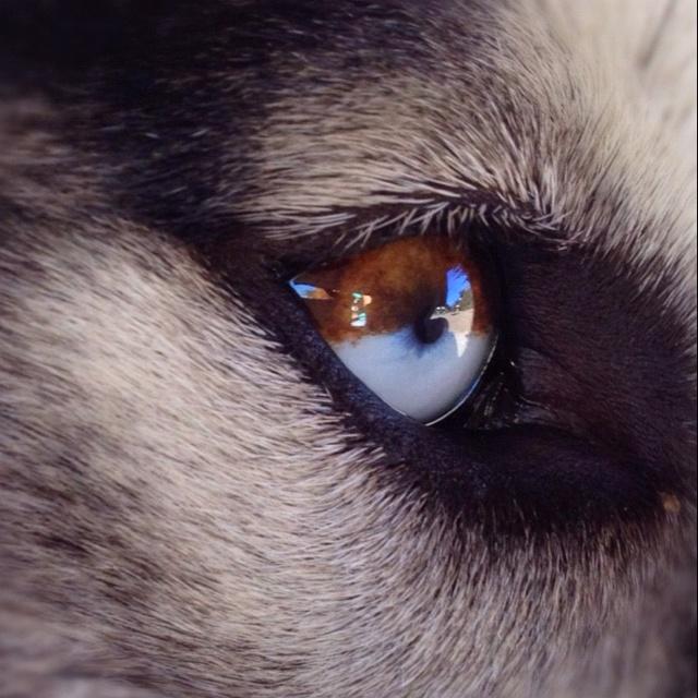что цвет волчьих глаз фото нескольких странах