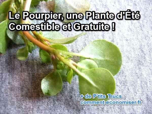 Les 25 meilleures id es de la cat gorie pourpier sur pinterest portulaca oleracea nom de - Comment trouver le nom d une plante ...