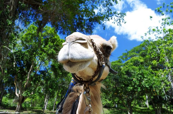 Happy #TravelTuesday from this friendly face at Prospect Outback Adventures in Ocho Rios, Jamaica.