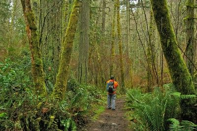 King County Good Hikes With Dogs