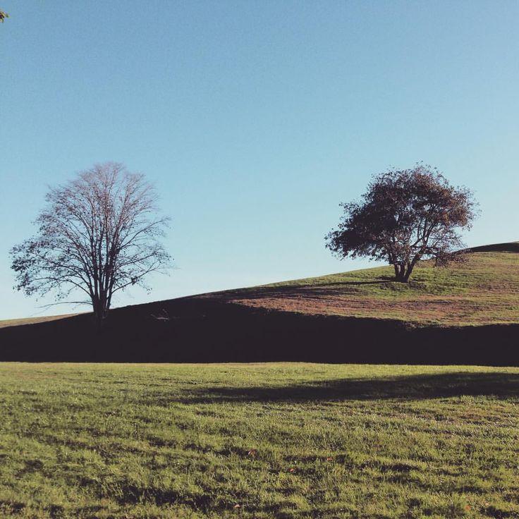 Trees on the hill #Halifax #citadel hill #garrisongrounds #halifaxrunforthecure