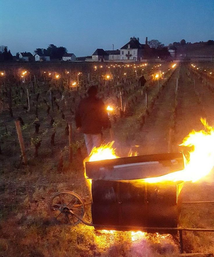 Fire in the vines: Burgundy winemakers fight against frost