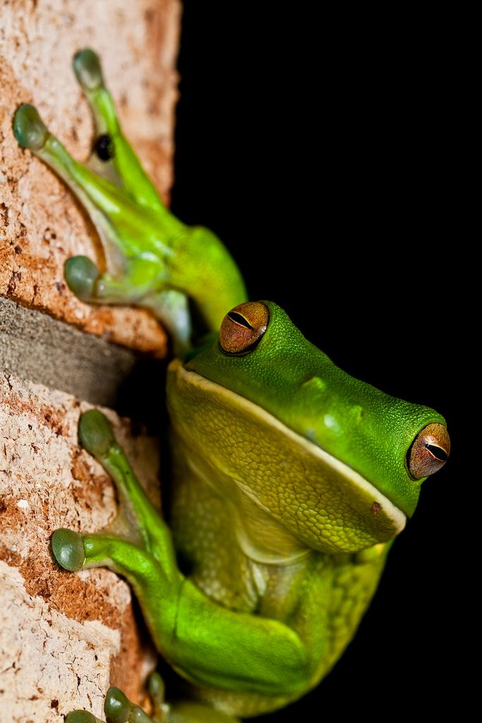 Who said Frogs aren't beautiful?