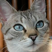 cat adoption san jose