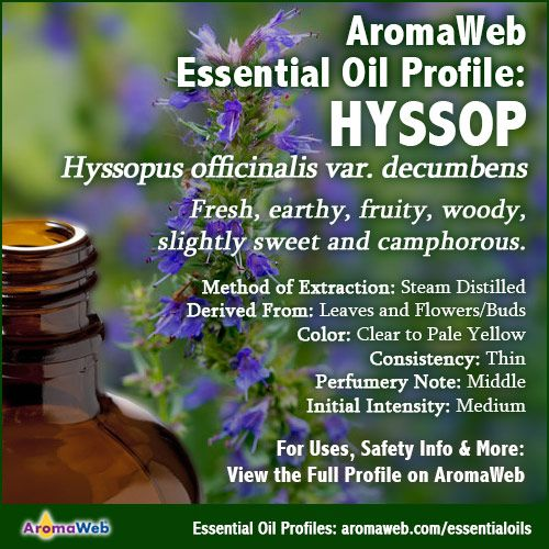 Hyssop Essential Oil Profile | Oils | Hyssop essential oil
